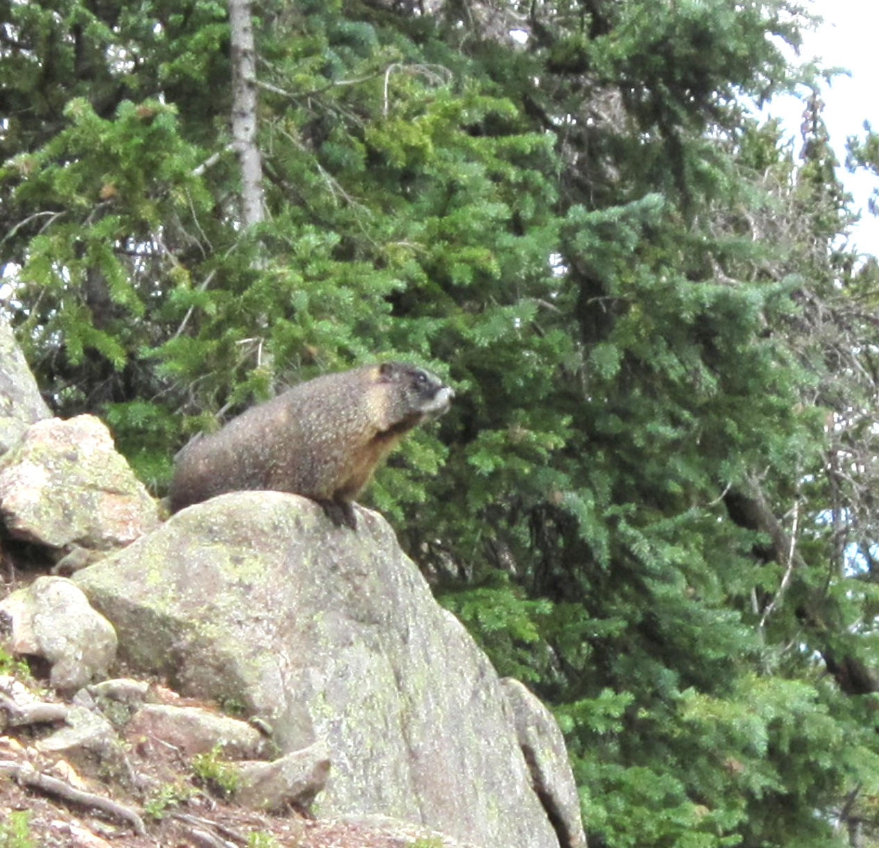 COSHRM Conference Marmot